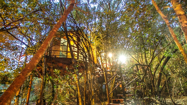 at Teniqua Treetops | TravelGround