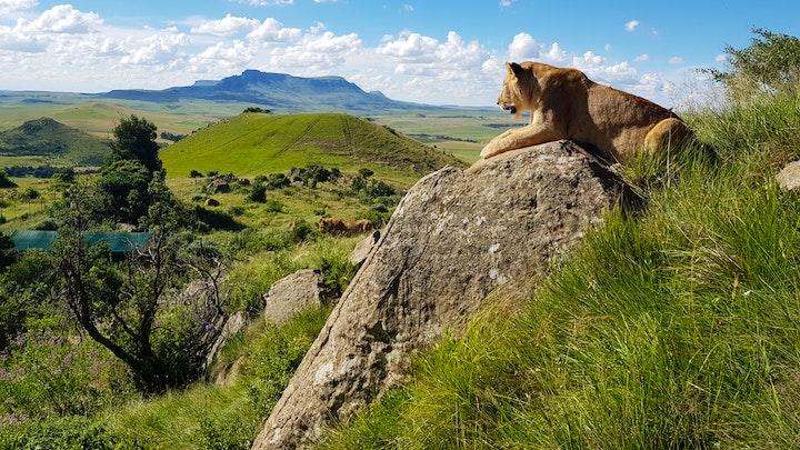 Drakensberge Akkommodasie by Love Lions Alive Sanctuary | LekkeSlaap