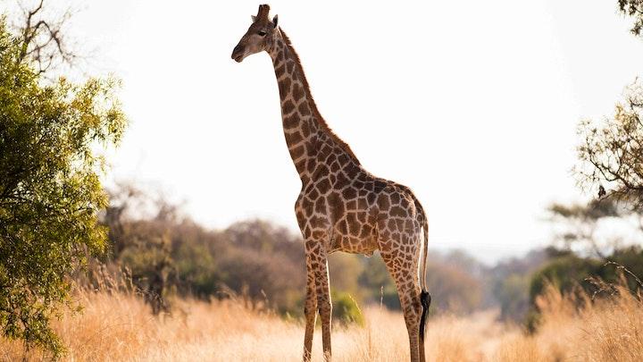 Bojanala Accommodation at Mziki Safari Lodge | TravelGround