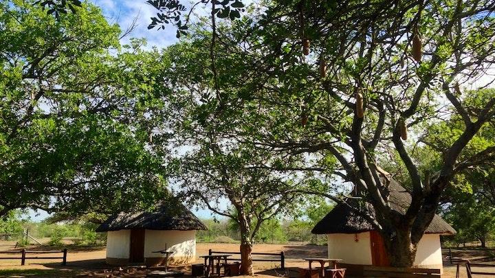 at SANParks Balule Rest Camp | TravelGround