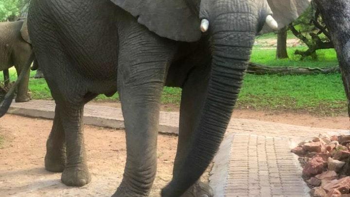 at Mabalingwe Elephant Lodge   TravelGround