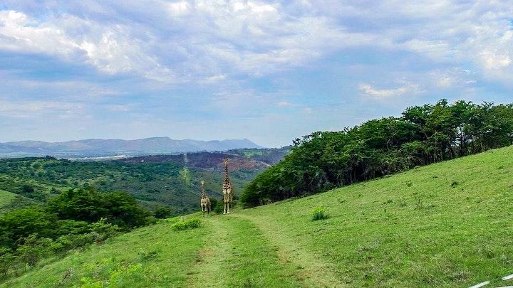 at Simbonga Game Farm | TravelGround