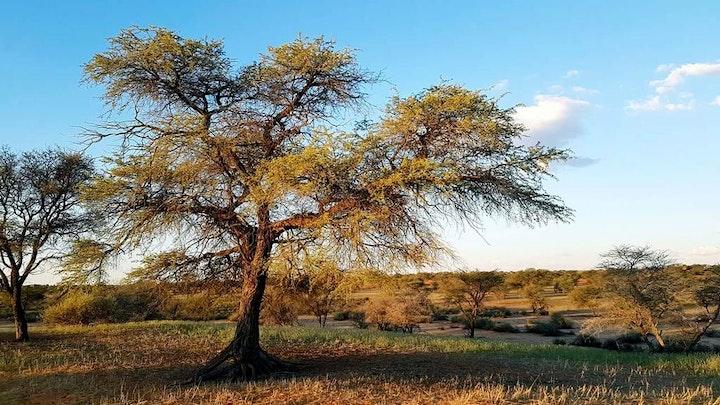 by Jansen Kalahari Guest Farm | LekkeSlaap