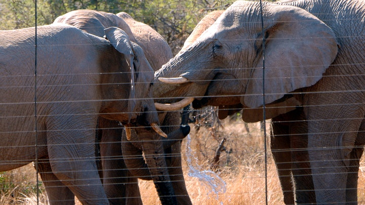 Dinokeng Accommodation at Elephant Waterhole | TravelGround